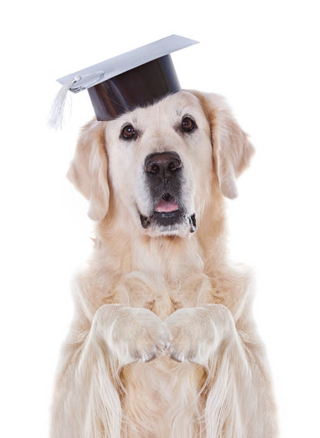 Therapy Dog Wears Her Own Cap and Gown at LHS Commencement Ceremony ...